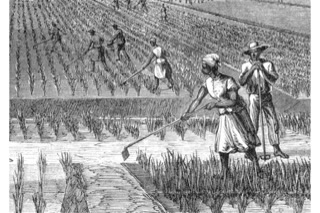 enslaved cotton workers